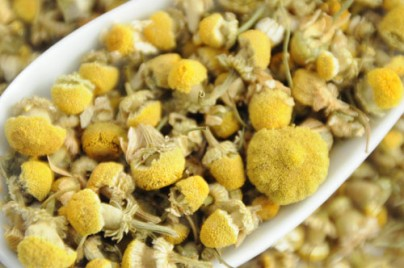 Fresh Organic Chamomile Tea Flowers